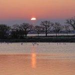 Sonnenaufgang über dem Ètang de Pierre Blanche, Flamingos